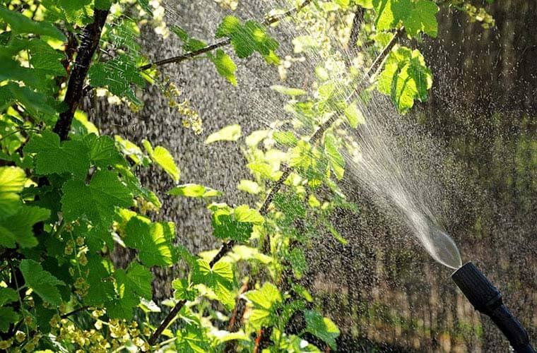 Bekämpfung von Blattläusen durch Allgäu Service