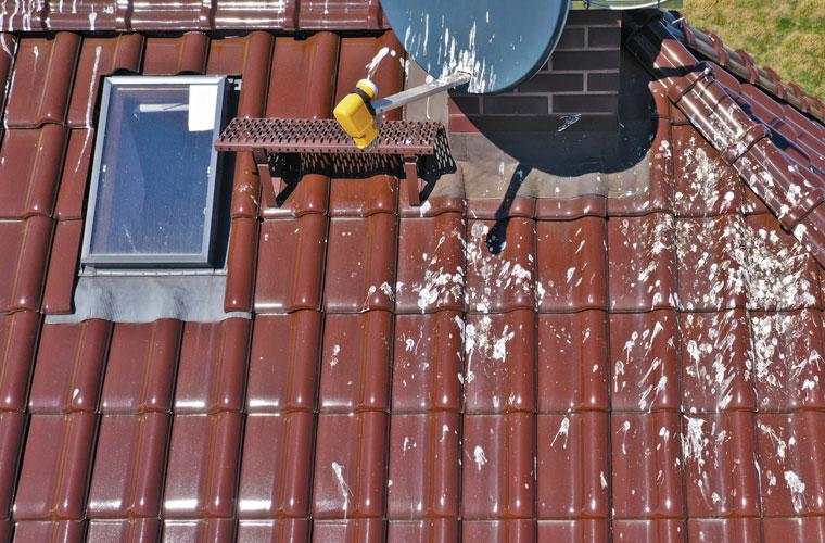 Taubenkot auf dem Dach - Taubenverkrämung AS Umwelthygiene